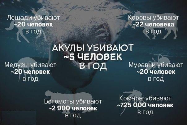 Акулы плохие! Акулы убивают... Встану на их защиту, вот Вам забавная статистика.