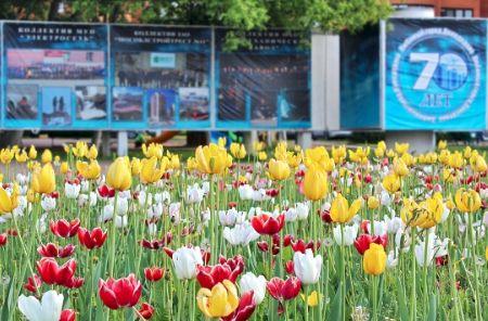 Домодедово становится городом цветов - Сайт города Домодедово