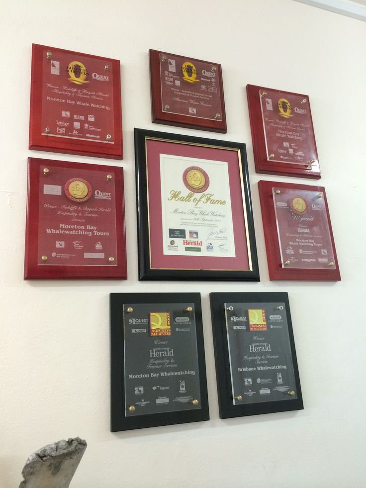 Our Hall of Fame #brisbanewhalewatching #whalemerch #australiansouvenir #whalemerchandise #whalewatching #australia