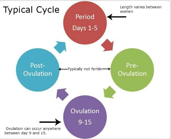 Chances of getting pregnant each cycle