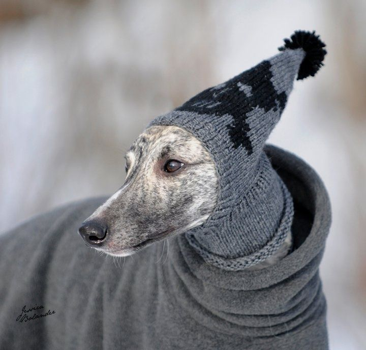 30 Knitted Hats And Sweaters For Cats And Dogs, Modern Pet
