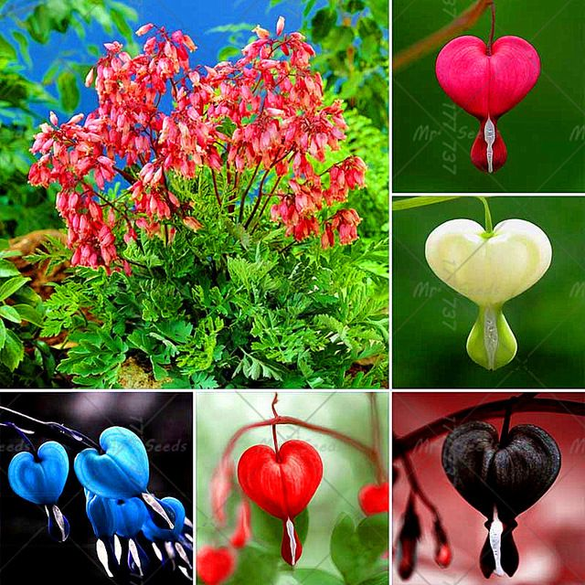 Pin On Dzialka Kwiaty 1 Mrseed