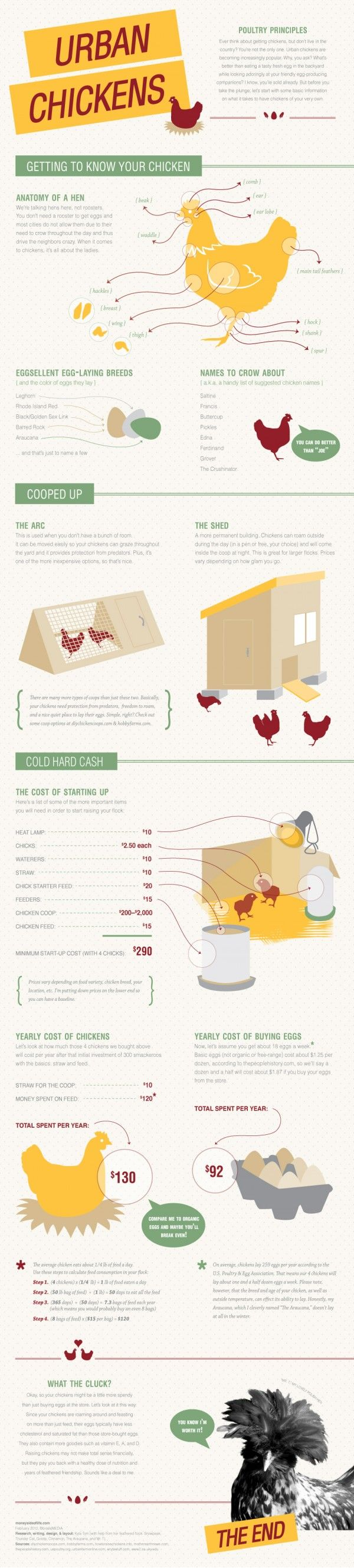 #urbanchickens  - An Infographic that informs pet, chicken and egg enthusiasts that keeping a chicken or chickens, is not as bizarre an idea as most people think it is.  From the anatomy to suitable names to the cost and management guidelines for starting one's own egg business, this Infographic has everything you would want to know prior to engaging in anything to do with chickens.
