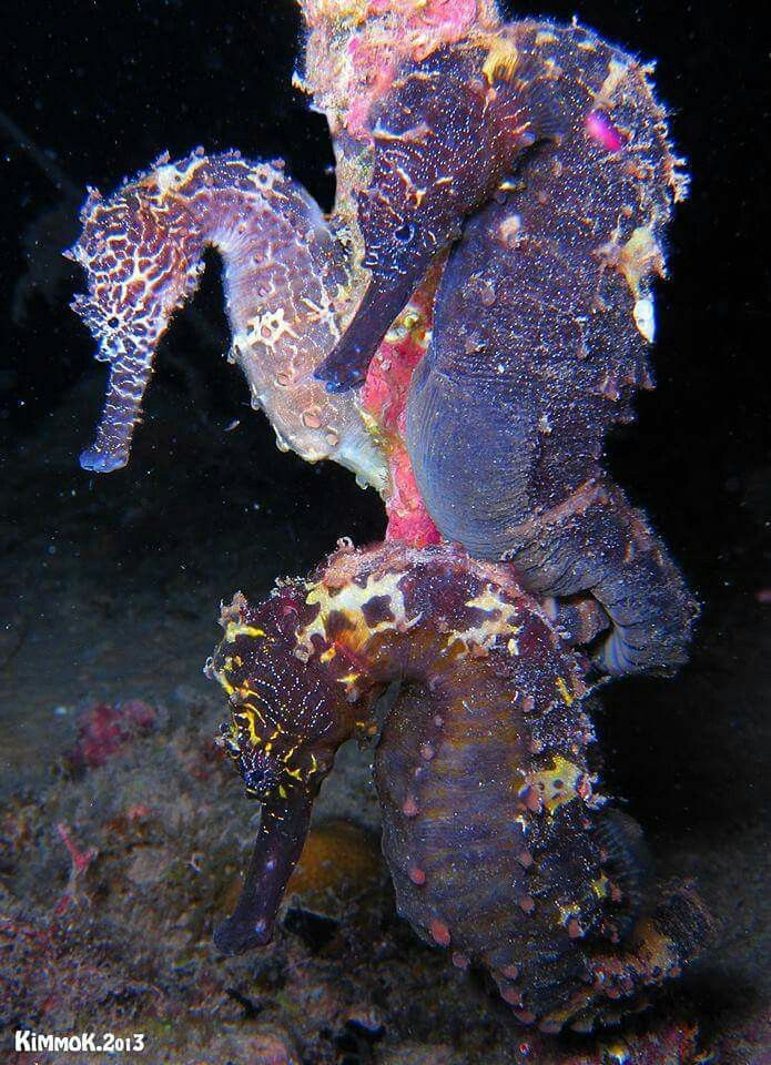 glowing seahorses, so cool looking. I wish I had some in a fish tank