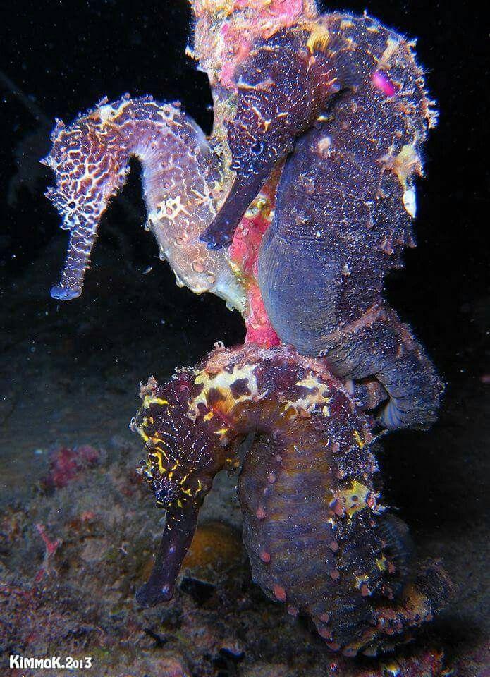glowing seahorsies!