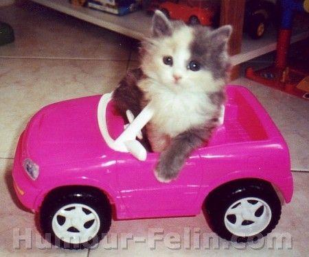 Photo drole de chat - En voiture Simone!