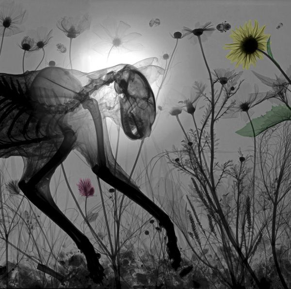 Arie van't Riet's X-ray Photography Examines Nature   Hi-Fructose Magazine