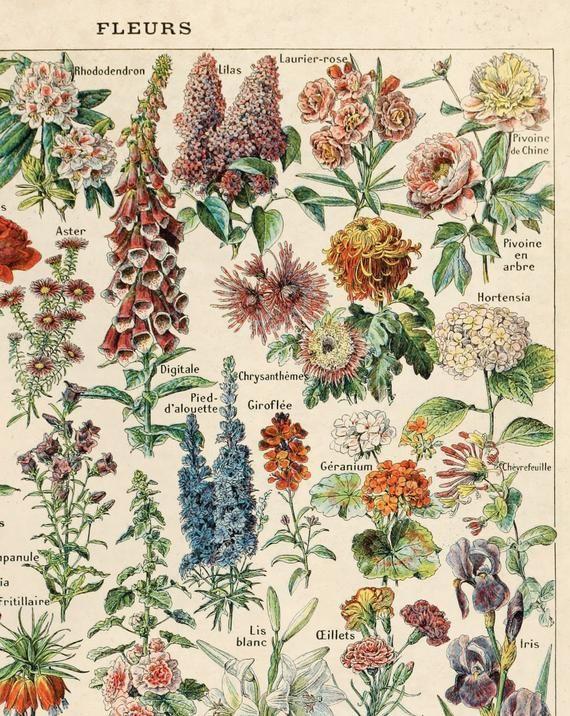 Vintage French Garden Flower Print Fleurs Le Petit Larousse By