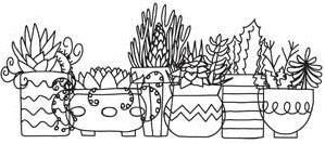 Succulents_image