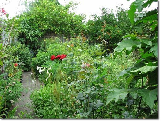 Excellent article! Lessons from an Urban Back Yard Food Forest Experiment - The Permaculture Research Institute
