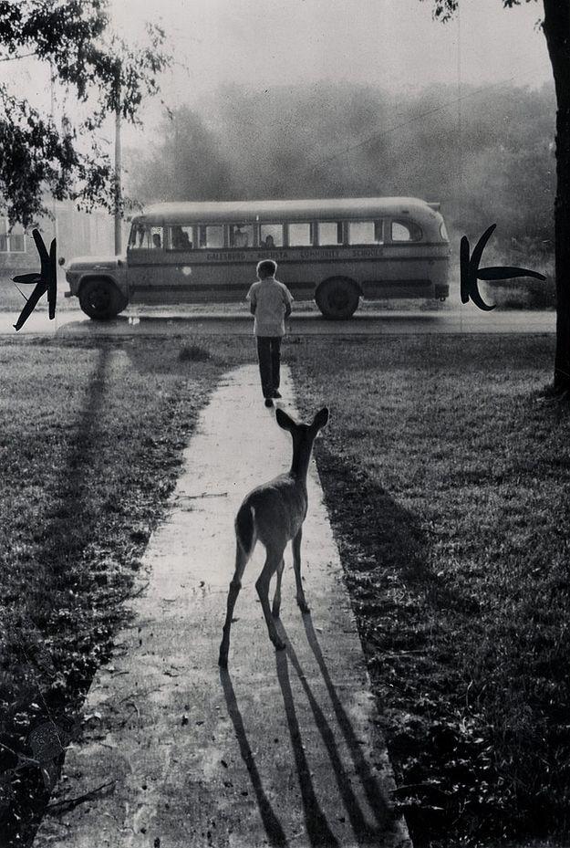 Cervatillo de un chico mascota le vio subir al autobús escolar.: