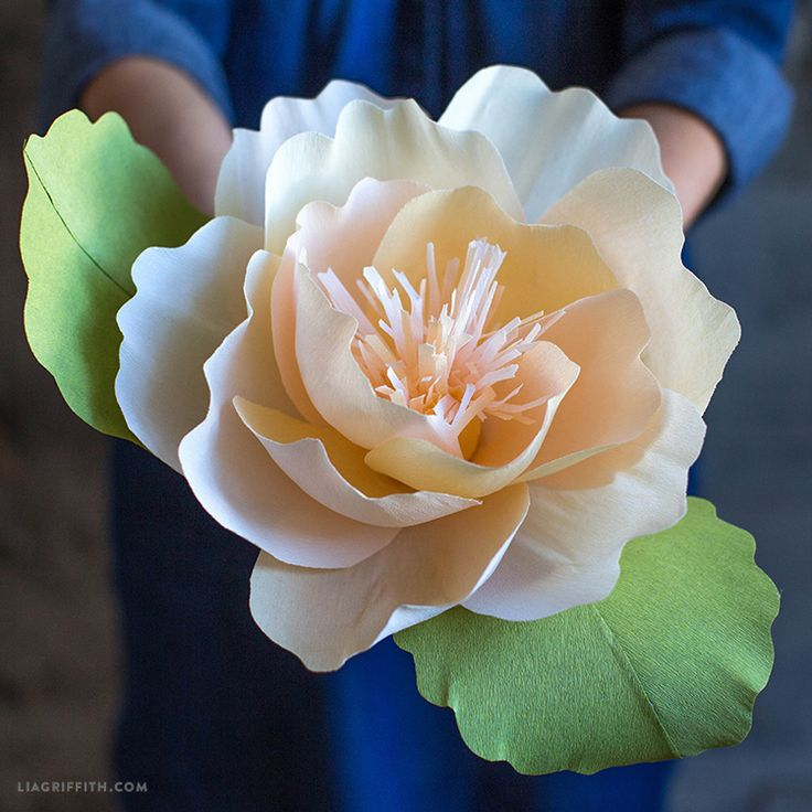 Jumbo Paper Peonies: if you are going to be making your own flowers out of paper, why not make them larger than life for your very special day or event?