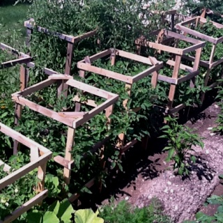 Tomato cages tomatoes and homemade on pinterest