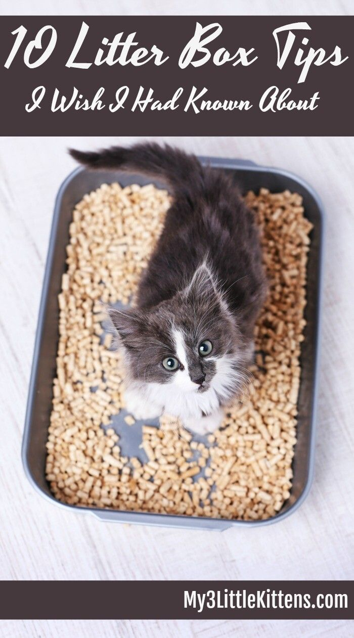 Pin On Cat Litter
