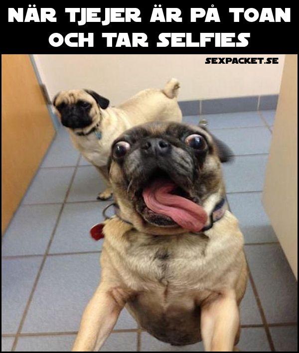 Här är 10 fantastiska memes med vår smarta och bästa vän. Kredd: Sexpacket