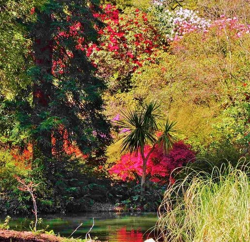 Images Of Exbury Gardens England New Forest And Hotels Nearby Great British Pinterest