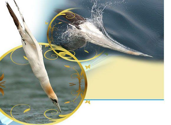 Diğer Canlılarla Yardımlaşan Ve İşbirliği Yapan Sümsük Kuşları