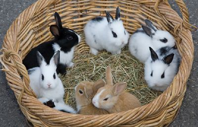 Good Morning EveryBun We've Had #Cute Bunnies In Boxs But This Basket Of #Bunnies Is The Cutest Thing! #BunnyBox