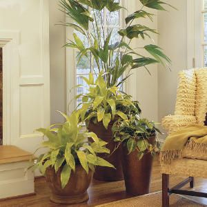 17 Best Images About House Plant Display On Pinterest