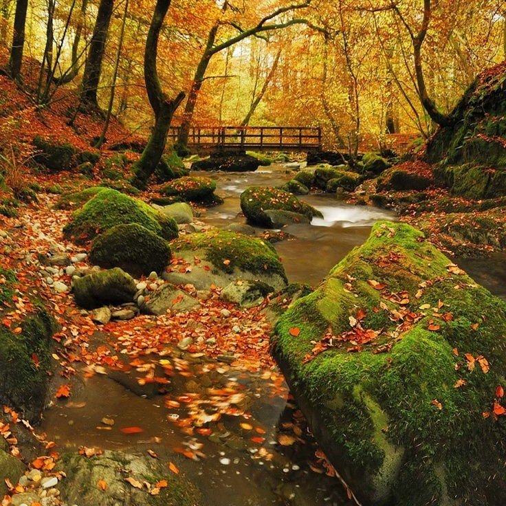 Fall Wallpaper Images Free: 80 Best Images About Painting Or Backgrounds On Pinterest