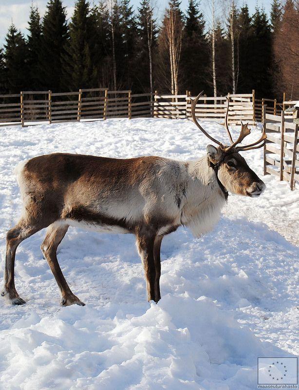 Valkeisen Loma Ähtärissä © Saana Kormano, 2013