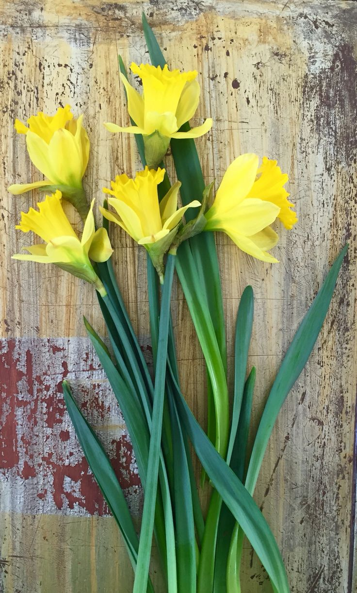 Daffodils - so refreshing on a winter's day!