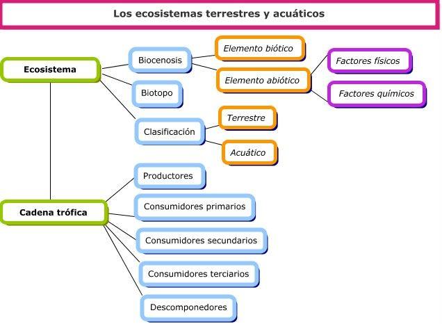 Mapa Conceptual Mapa Conceptual Ecosistema Terrestre Y Acuatico Lectura De Comprensión