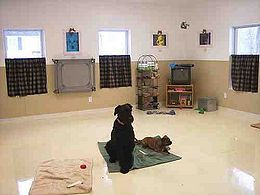 How to Become a Dog Trainer- There are no college or university programs for dog trainers, but there are a select number of dog training schools for students to receive an education. If you want to learn how to become a Dog Trainer you can visit  http://www.bestjobsinfoguide.com/How_to_Become_a_Dog_Trainer to know more.