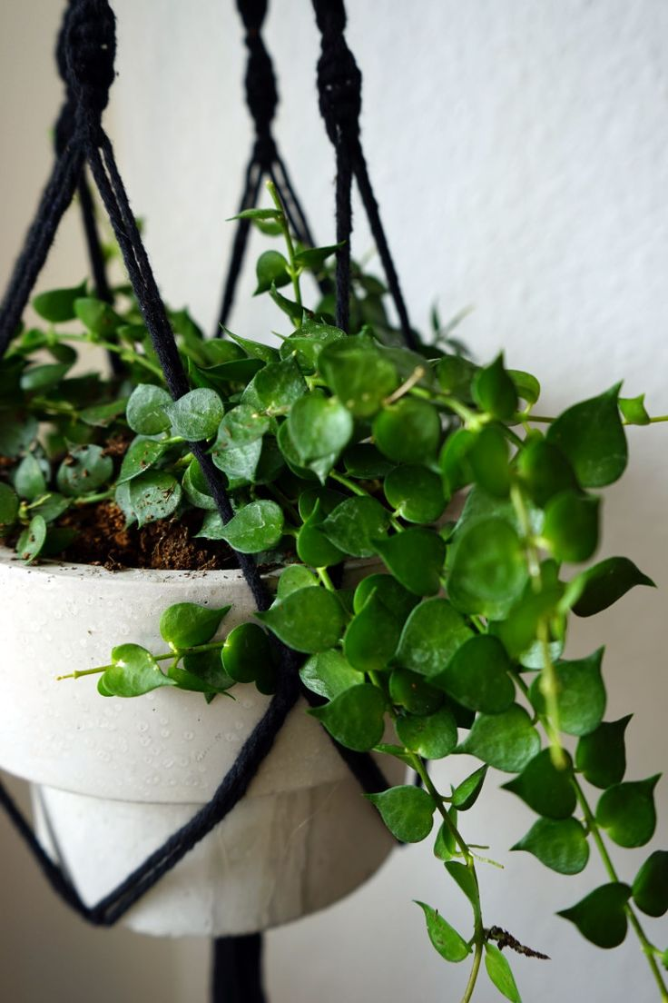 hanging plants to keep the floor clean