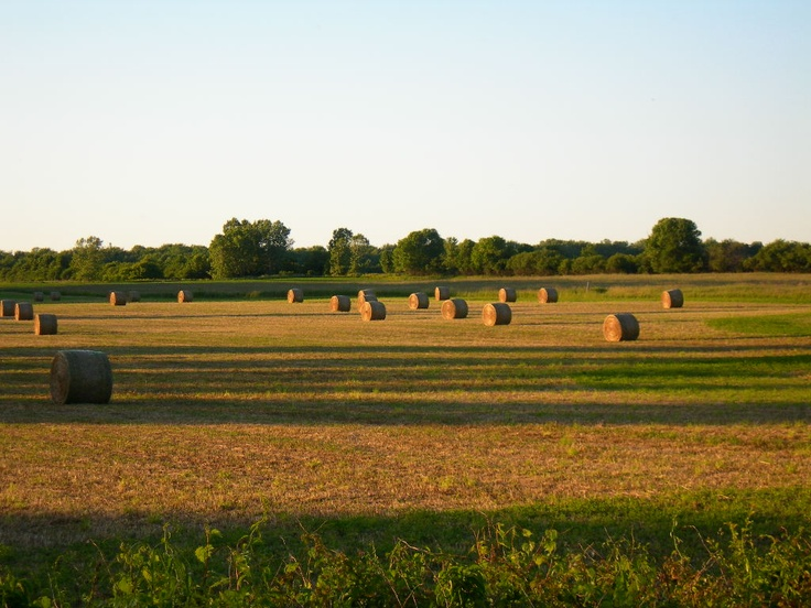 Hay bales on the farm field across the road from our house in Wellington, Prince Edward County, Ontario.