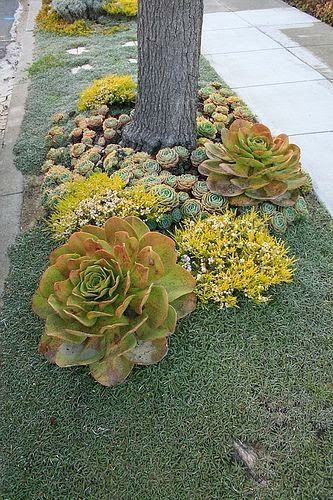 Drought tolerant parking strip..great idea for someone...I can't do this, but it is really pretty.