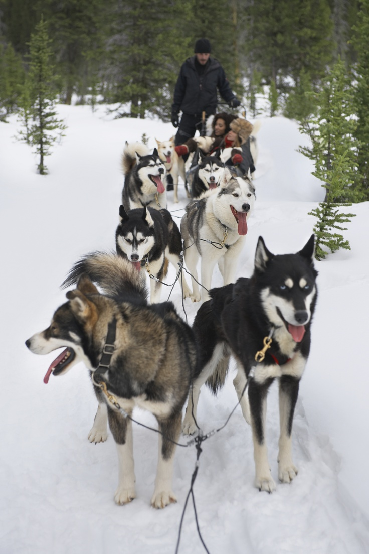 Siberian Husky Quebec Say hello to the best ...