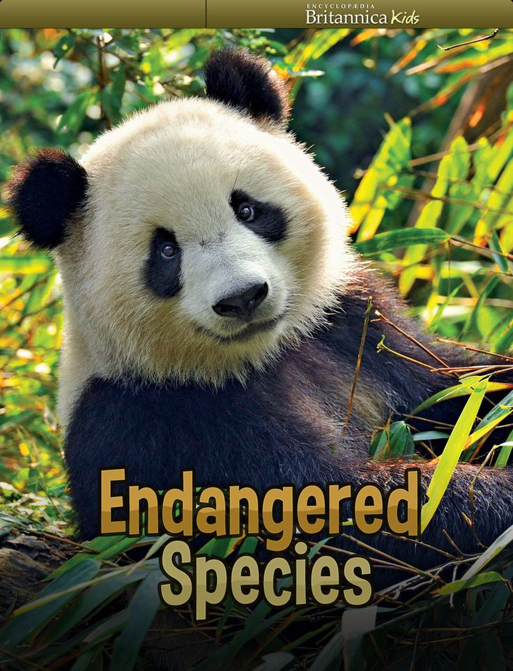 essays on endangered species There are many endangered species, including the siberian tiger, elephants, leather-back sea turtles, snow leopards.