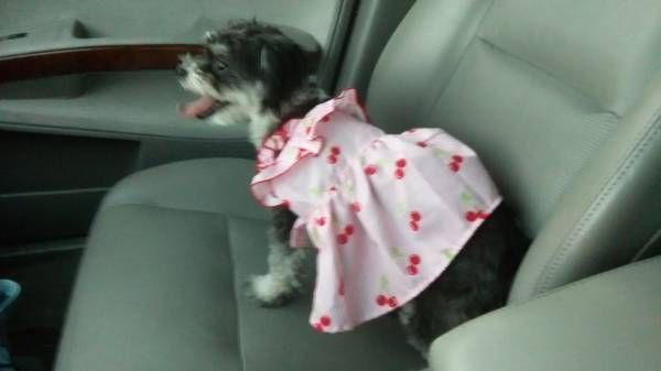 FOUND DOG: 07/22/2017 - Paradise, Nevada, NV, United States. Ref#: F33887 - #CritterAlert #FoundPet #FoundDog