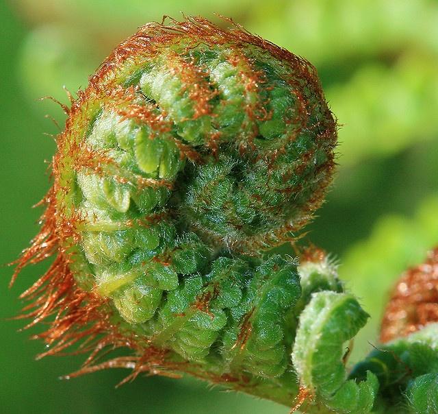 Spirals in Nature