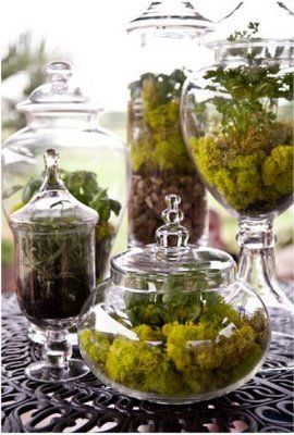 love these woodland naturescapes in different glass containers.....