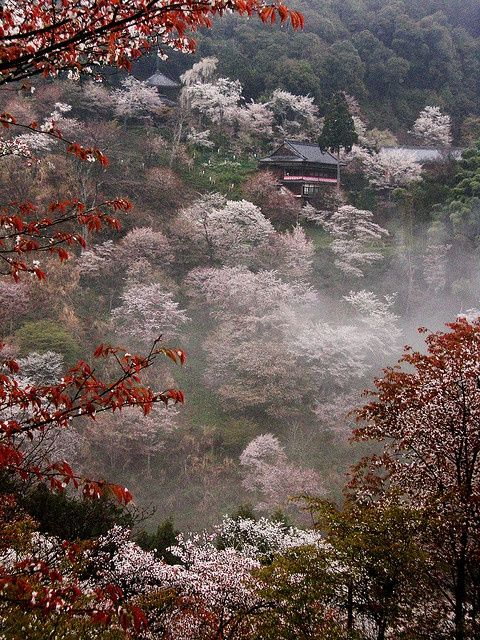 Misty temple in Yoshino, Japan