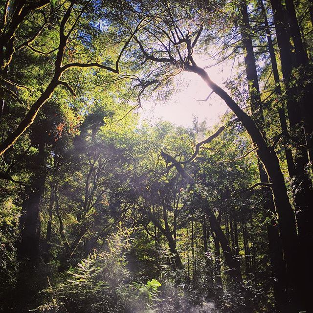 Caliparks : Big Basin Redwoods State Park