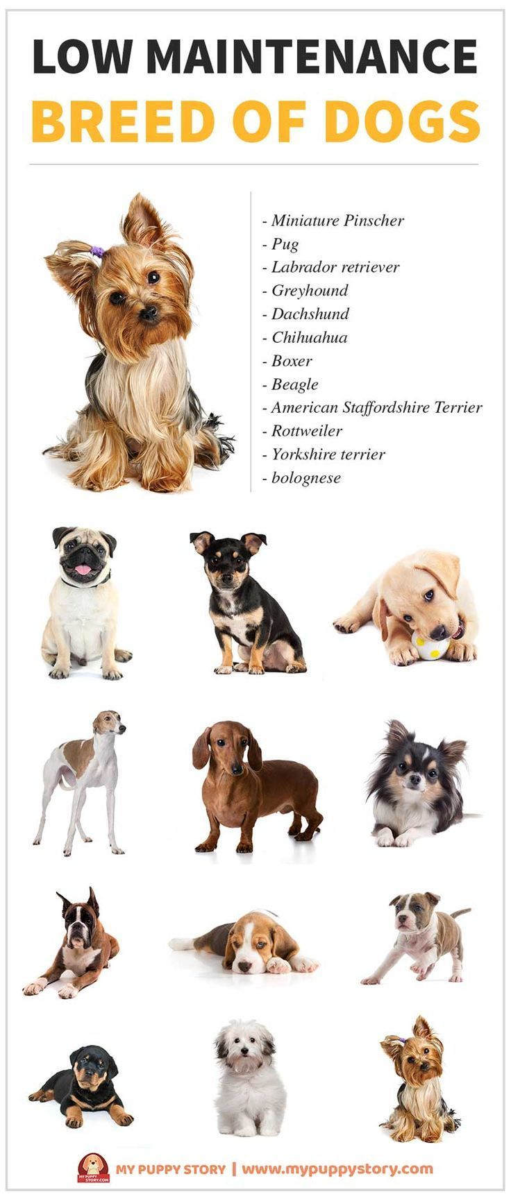 Everything You Need To Know About Low Maintenance Dogs My Puppy Story Whether You Are A New Pet Parent Or Dog Breeds Low Maintenance Dog Breeds Happy Dogs