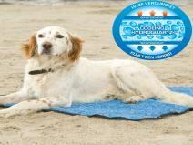 Koeldeken blauw 80  Description: Kerbl Koeldeken blauw 80Geef uw huisdier tijdens warmte extra verkoeling door ze op een koelmat te leggen. Deze koelmat is ideaal voor op de camping in de woonkamer auto of op het strand. De koelmat geeft uw hond kat konijn of ander huisdier verkoeling op een veilige en verantwoorde manier. Deze verkoelingsmat maakt uw hond 8 tot 12 graden koeler.Koeldeken voor hondenDeze koelmat is te gebruiken zonder een vriezer. U dompelt de koeldeken onder water en wacht…