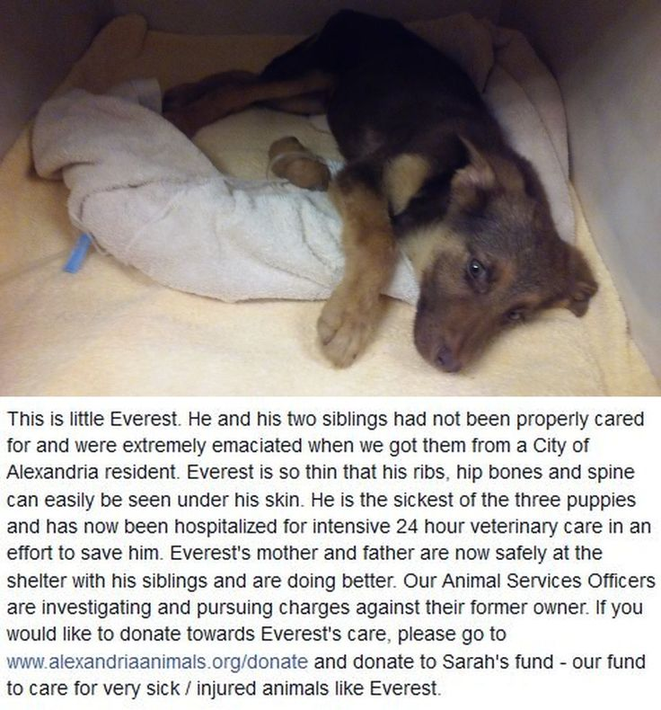 Please Read Little Everest S Story Above And If You Are Able To Help Please Go To Www Alexandriaanimals O Animal Welfare League This Or That Questions Animals