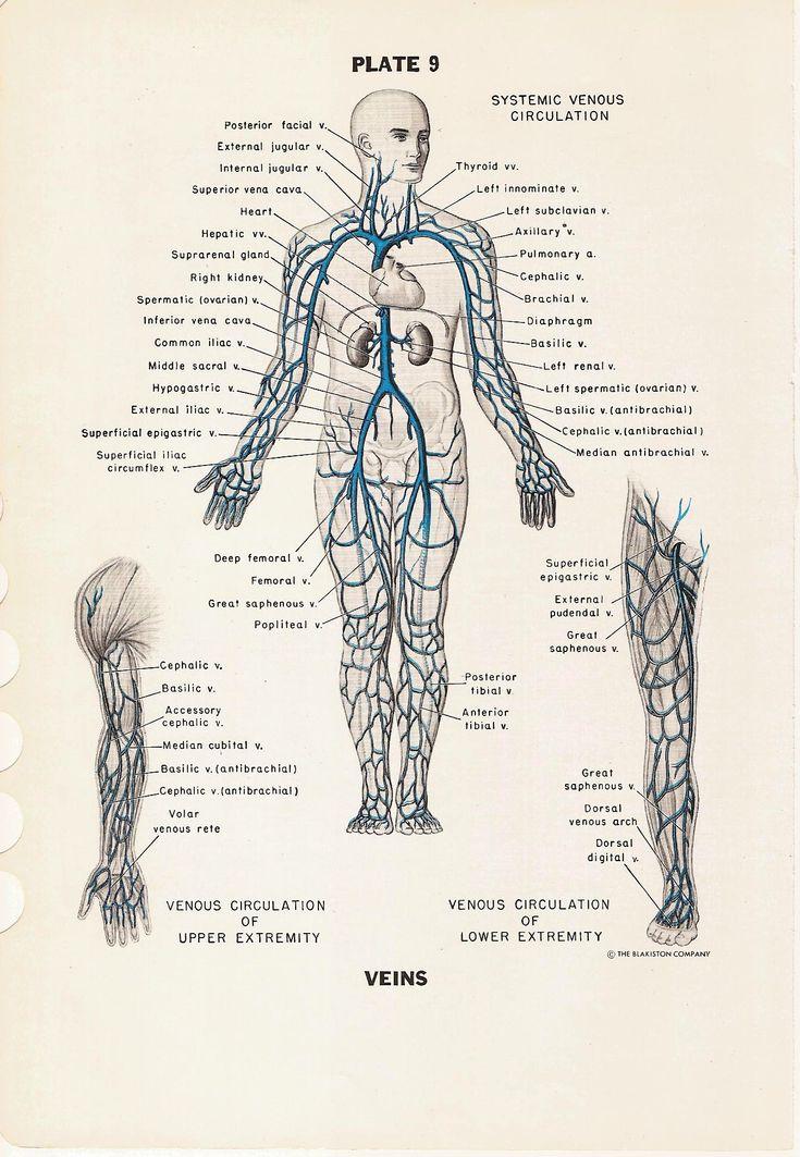 majorarteriesoftheheadviceratrunkandextremities