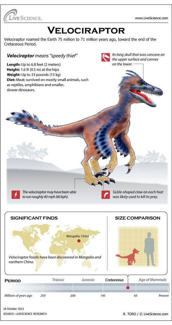 Learn about the horns, bones, habitat and other secrets of Velociraptor.