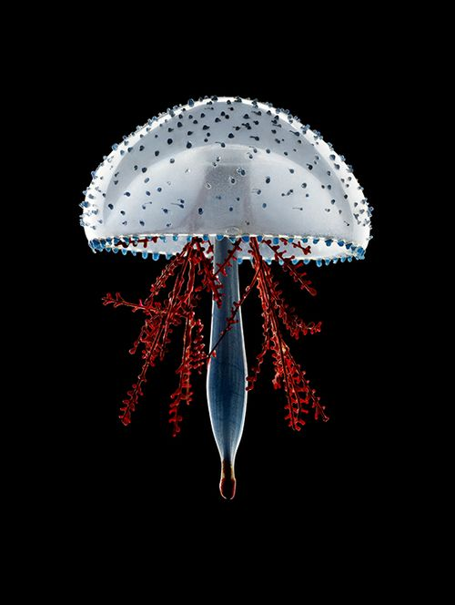 Lymnorea triedra, 2013, by Guido Mocafico.  White Jellyfish with dots and red tendrils.                                                                                                                                                      More