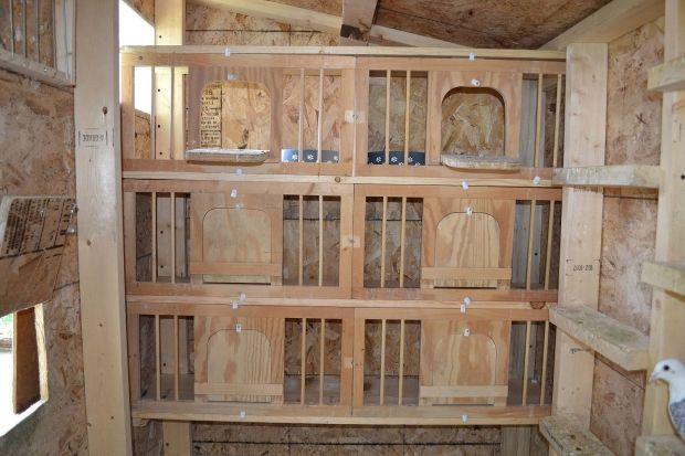 pigeon nest box plans | Pigeon Loft Construction