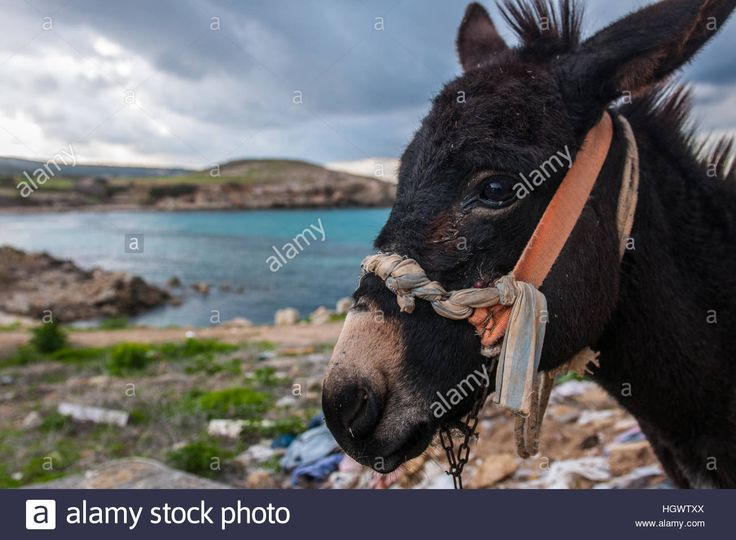 A #donkey in #karpaz northern sea of #Cyprus  #nature #travel #lifestyle #summer
