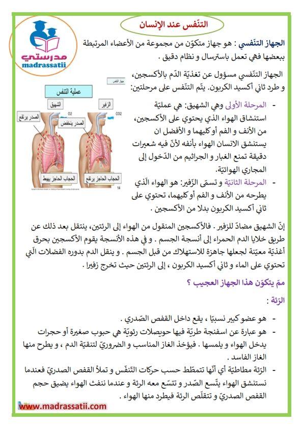التنفس عند الانسان عملية التنفس الشهيق و الزفير Education Word Search Puzzle Words