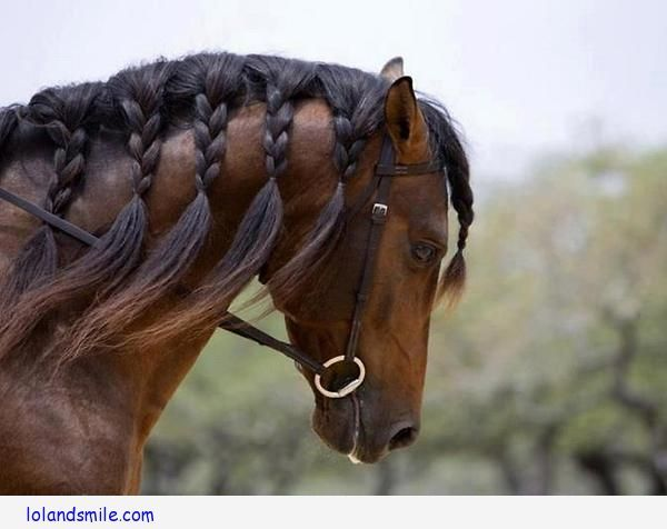 horse mane hair styles pictures cat 5694 | f25a5723d555e6224618a885cb744bf9