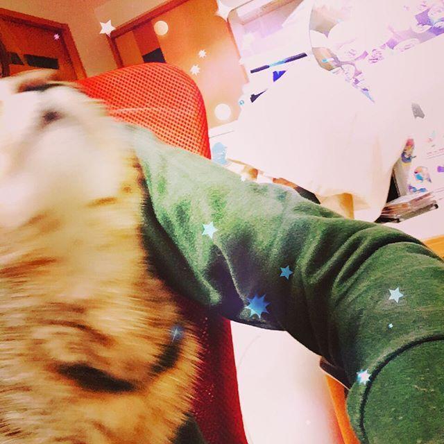 📷ツーショ失敗😅💦💦 . . . #ぶれぶれ #ツーショット #こねこ #猫 #にゃんすたぐらむ #愛猫 #家猫 #キジトラ #猫のいる暮らし #ねこのきもち #outoffocus #browntabby #catsofinstagram #ilovecat #catlover #kittycat
