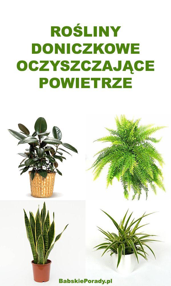 Rosliny Doniczkowe Oczyszczajace Powietrze Z Toksyn Plants